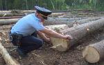 Статья 260 УК РФ за незаконную вырубку леса: санкции, определение ущерба и виды ответственности