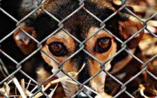 Что грозит за убийство животного и участие в животных боях?