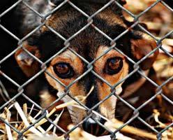 Жестокое обращение с животными: понятие, наказание, отягчающие обстоятельства