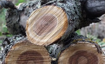Статья 260 УК РФ за незаконную вырубку леса, санкции, определение ущерба, виды ответственности