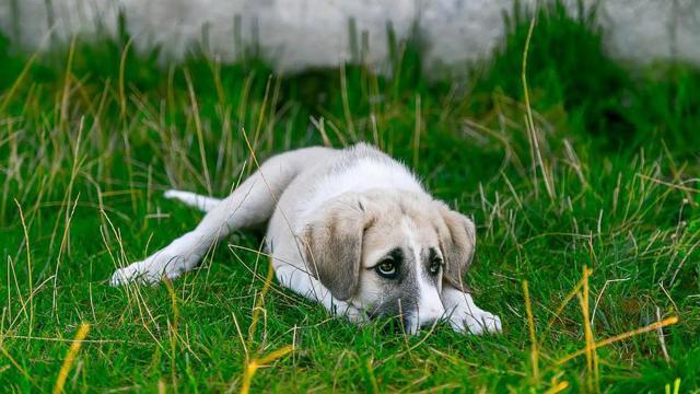 Убийство животного и деятельность догхантеров: ответственность